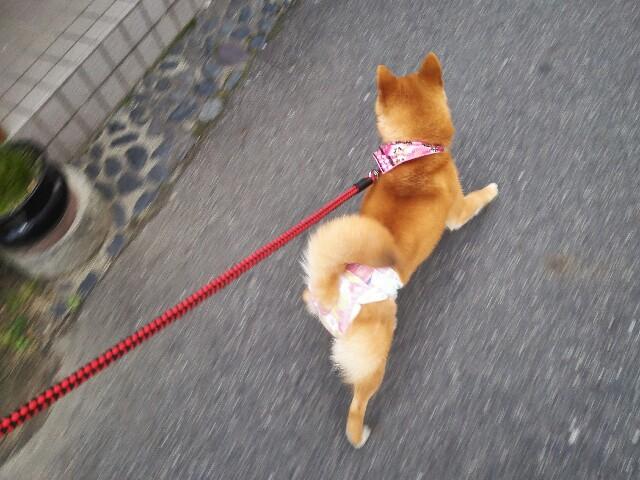 f:id:shibainumugi:20180203222103j:image