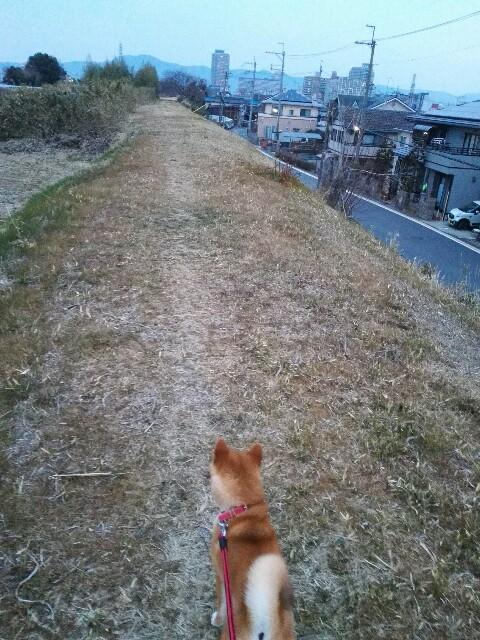 f:id:shibainumugi:20180221084236j:image