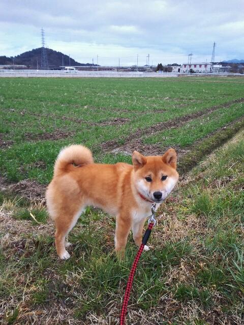 f:id:shibainumugi:20180310124457j:image