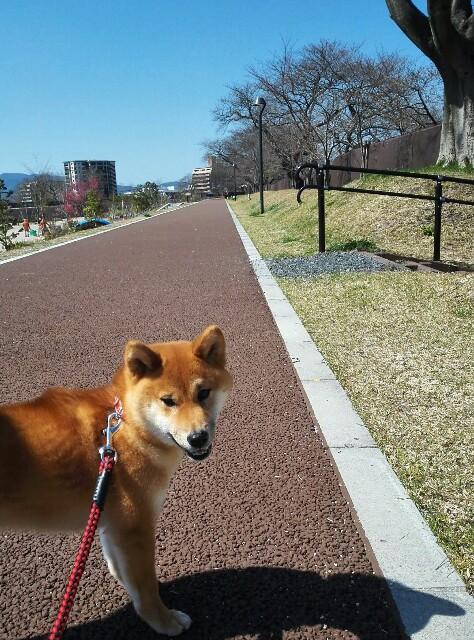 f:id:shibainumugi:20180317150615j:image