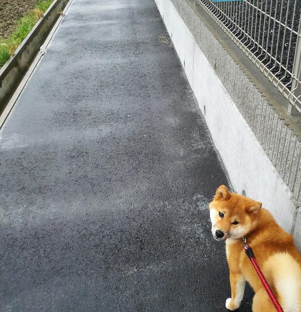 f:id:shibainumugi:20180319203109j:image