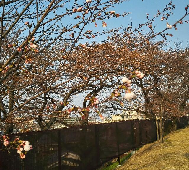 f:id:shibainumugi:20180325230916j:image