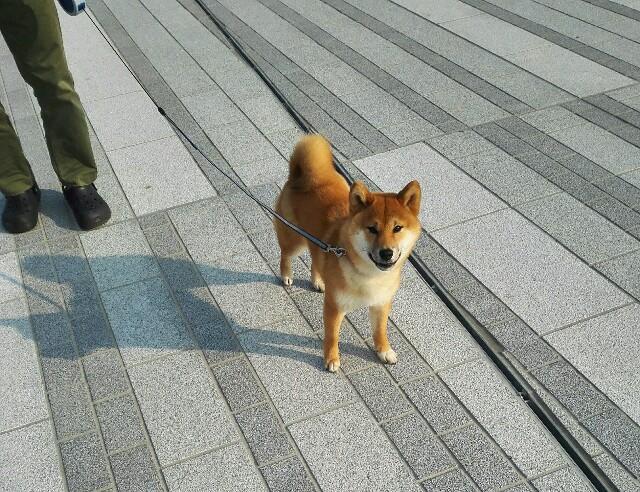 f:id:shibainumugi:20180325231100j:image