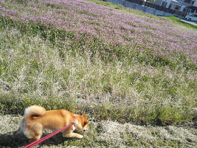 f:id:shibainumugi:20180421115734j:image