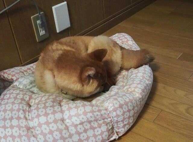 f:id:shibainumugi:20180421122649j:image