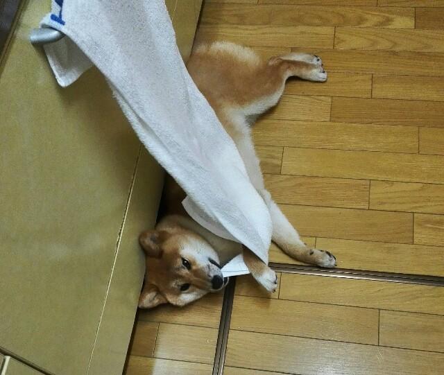 f:id:shibainumugi:20180422205611j:image