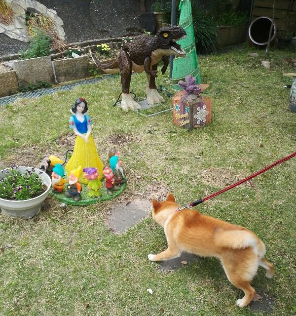 f:id:shibainumugi:20180501112654j:image