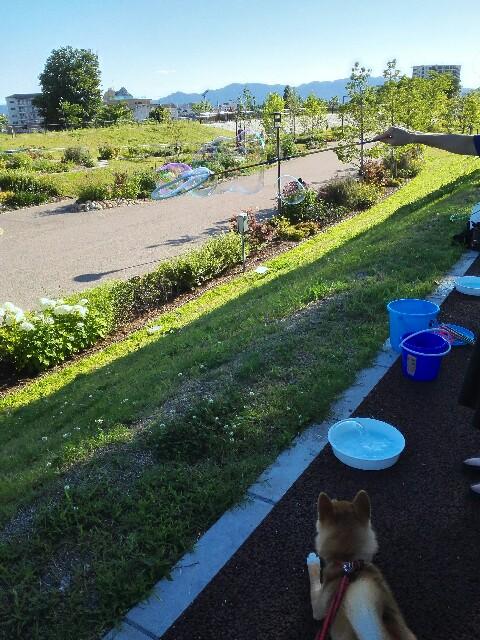 f:id:shibainumugi:20180617084102j:image
