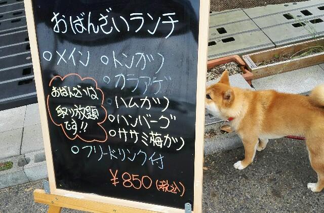 f:id:shibainumugi:20180617165105j:image