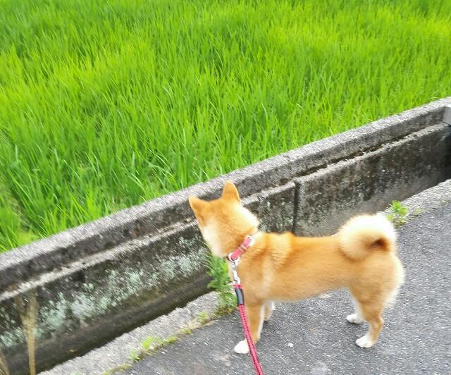 f:id:shibainumugi:20180630202021j:image