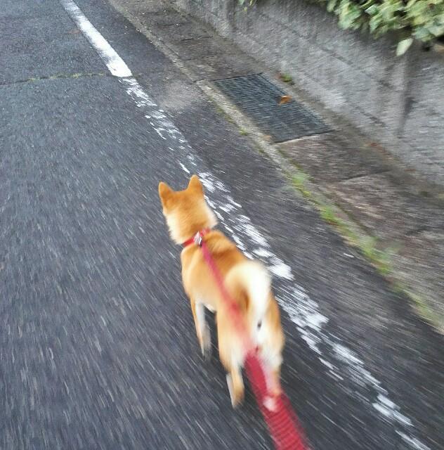 f:id:shibainumugi:20180630202422j:image