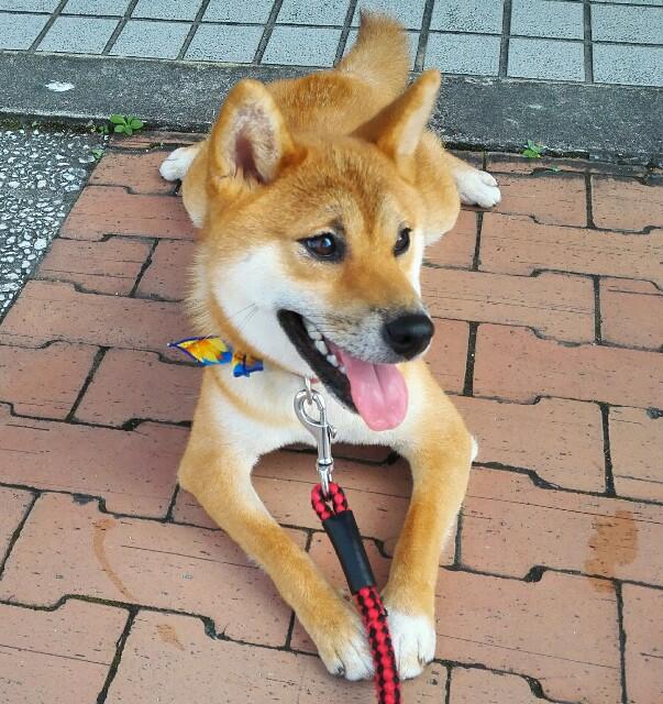 f:id:shibainumugi:20180714150853j:image