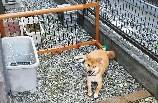 f:id:shibainumugi:20180714152459j:image