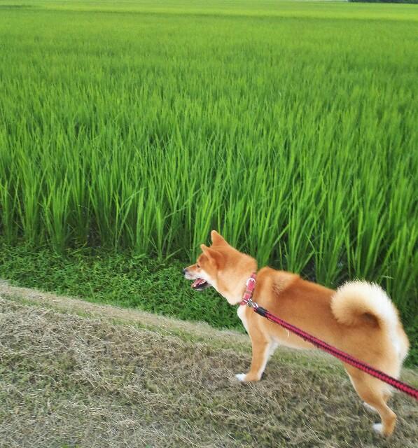 f:id:shibainumugi:20180716103706j:image