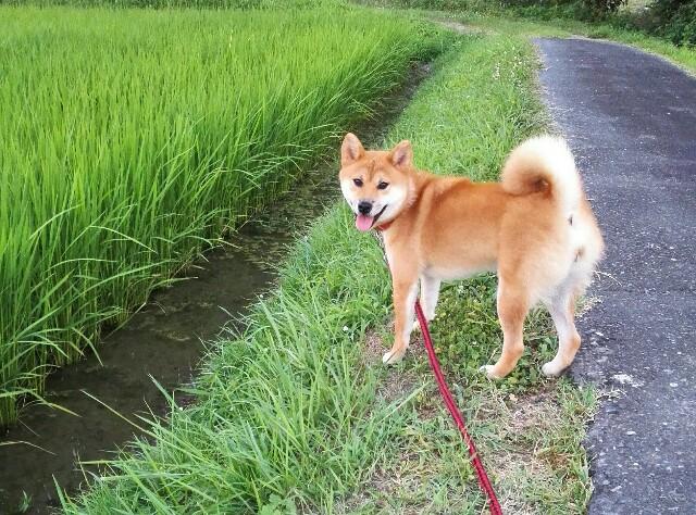 f:id:shibainumugi:20180720090733j:image