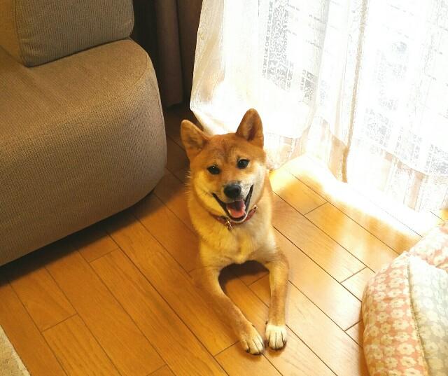 f:id:shibainumugi:20180728101750j:image