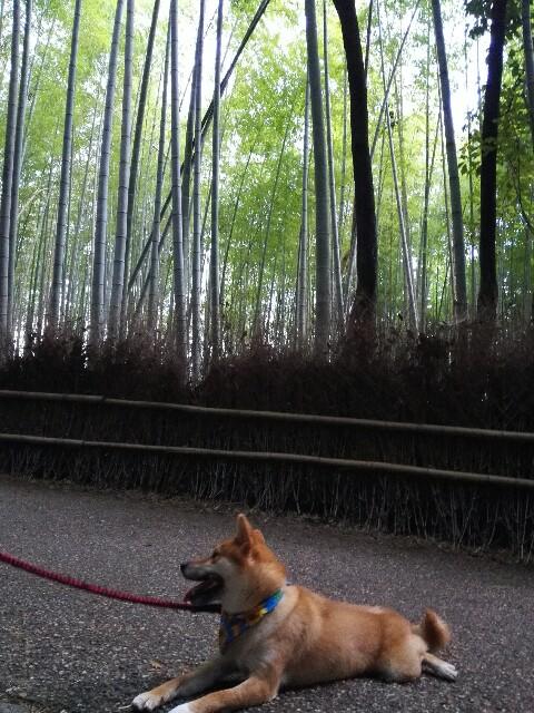 f:id:shibainumugi:20180814134406j:image