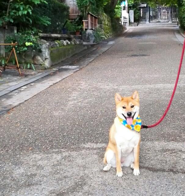 f:id:shibainumugi:20180814134436j:image
