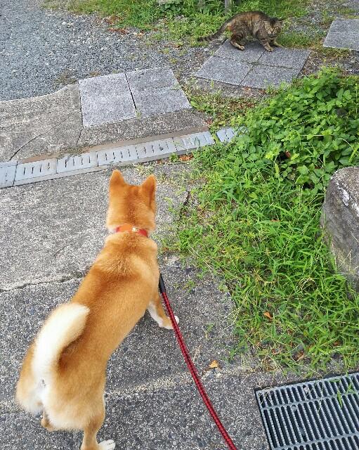 f:id:shibainumugi:20180815210417j:image