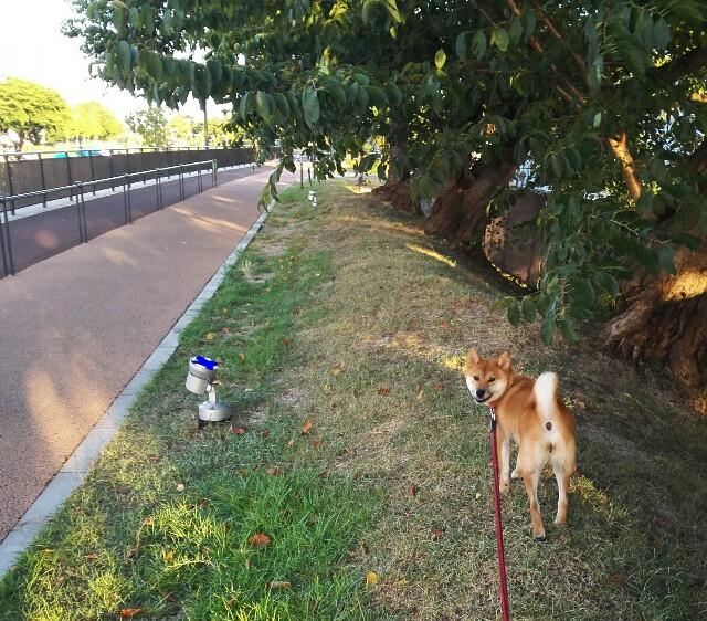 f:id:shibainumugi:20180817211450j:image
