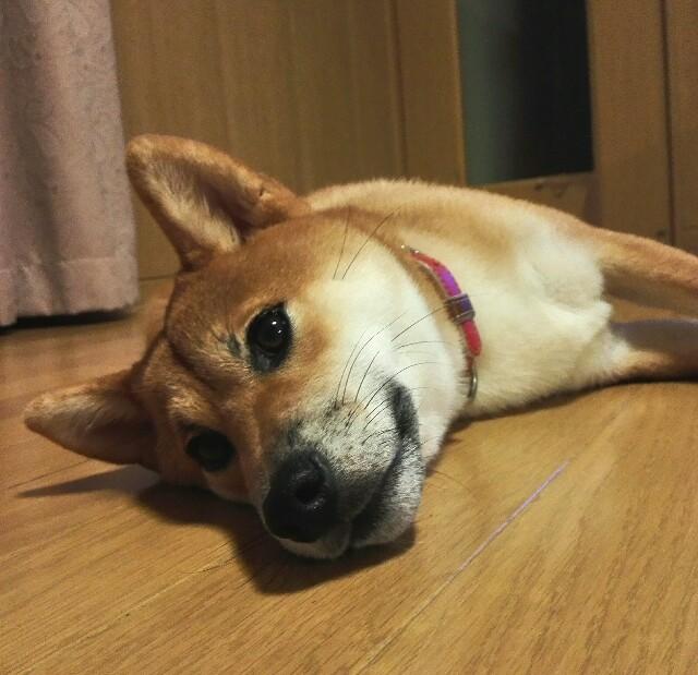 f:id:shibainumugi:20180915122936j:image