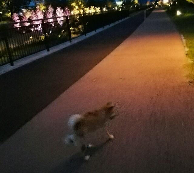 f:id:shibainumugi:20180921221413j:image