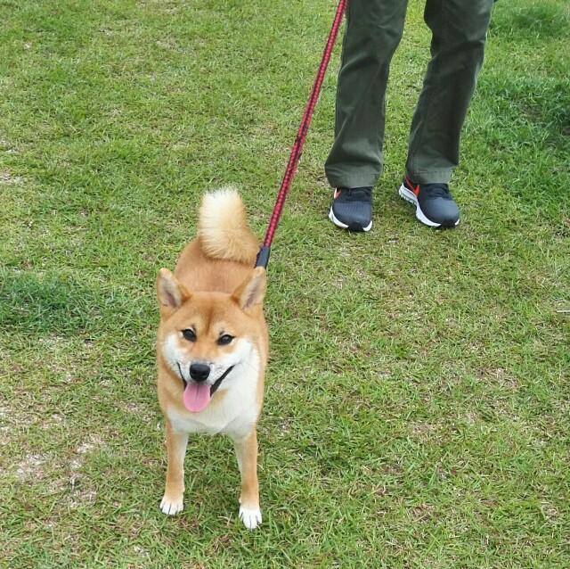 f:id:shibainumugi:20180924203240j:image