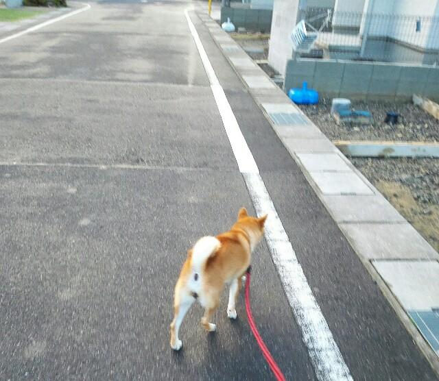 f:id:shibainumugi:20181001225904j:image