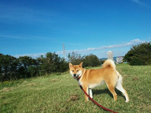 f:id:shibainumugi:20181013132354j:image