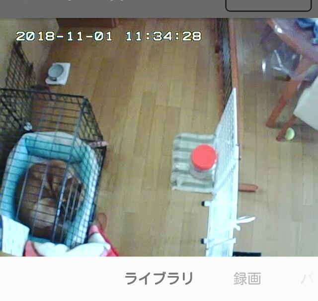 f:id:shibainumugi:20181101232838j:image