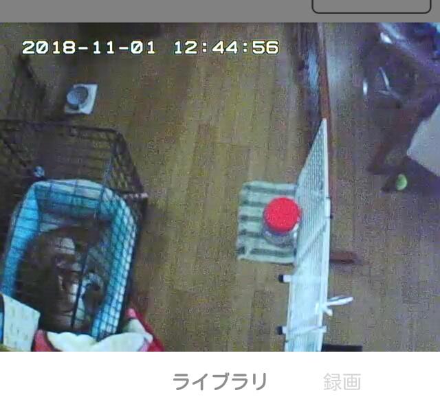 f:id:shibainumugi:20181101232912j:image