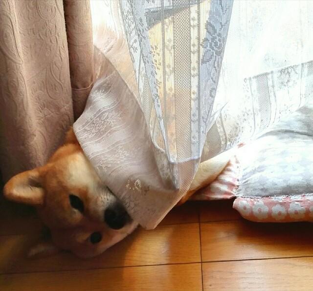 f:id:shibainumugi:20181203112139j:image
