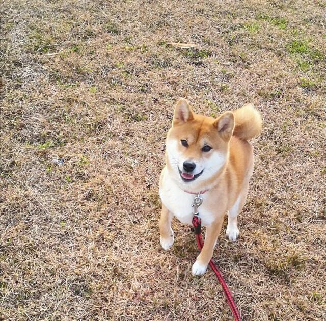 f:id:shibainumugi:20181228190216j:image