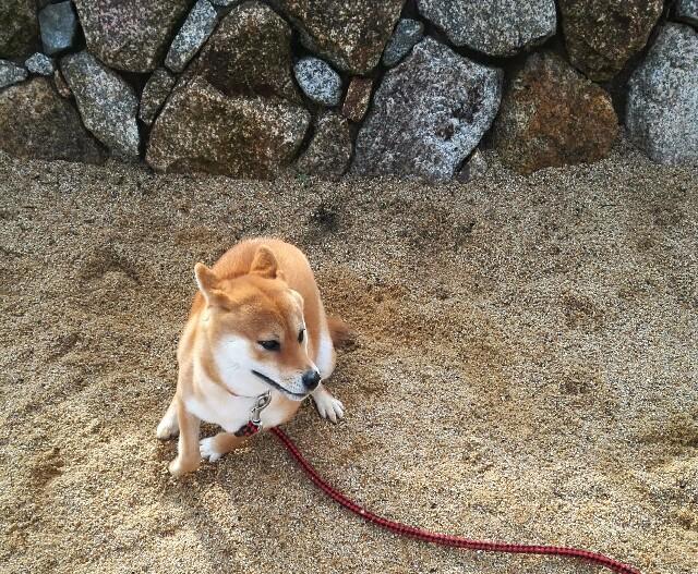 f:id:shibainumugi:20181231151658j:image