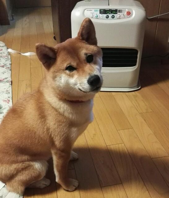 f:id:shibainumugi:20190110222648j:image