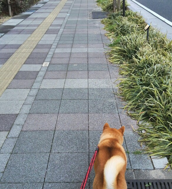 f:id:shibainumugi:20190113113021j:image