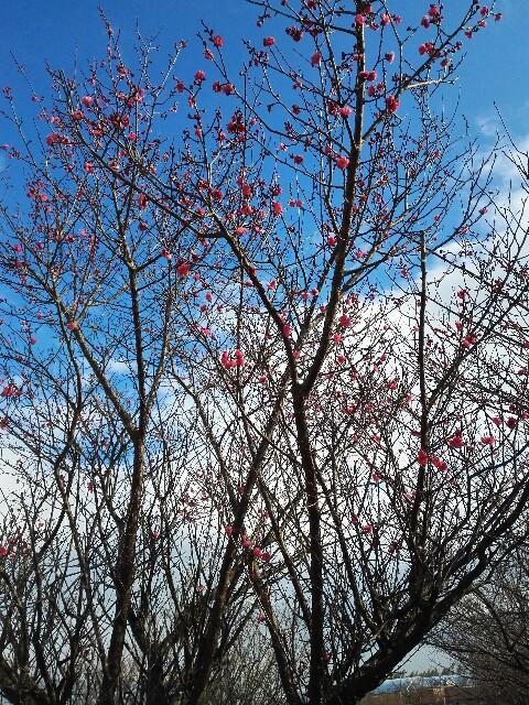 f:id:shibainumugi:20190116192834j:image