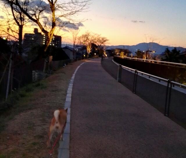f:id:shibainumugi:20190121193138j:image