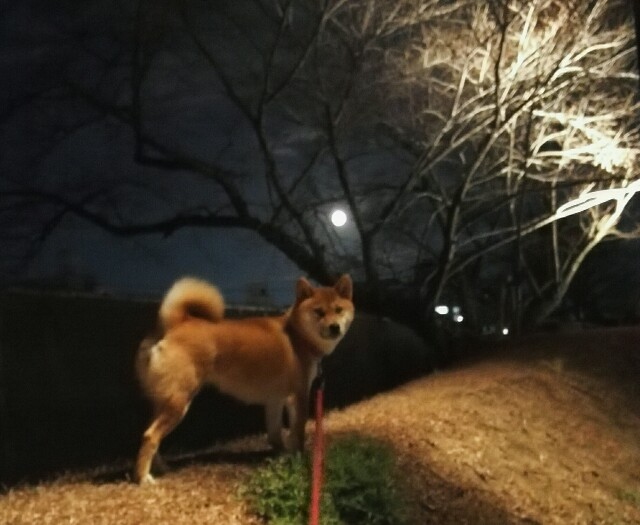 f:id:shibainumugi:20190121193227j:image