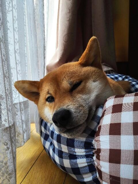 f:id:shibainumugi:20190303100204j:image