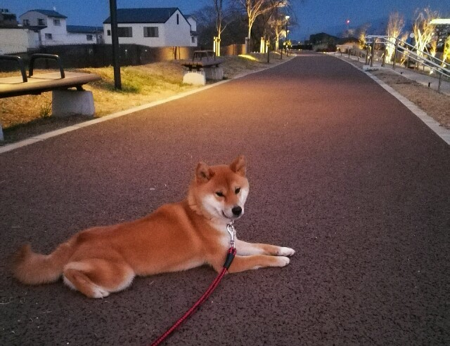 f:id:shibainumugi:20190307234958j:image