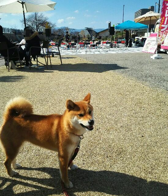 f:id:shibainumugi:20190309214357j:image