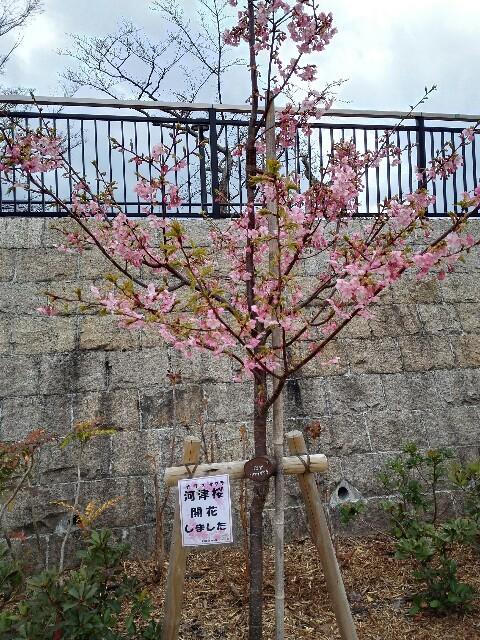 f:id:shibainumugi:20190314214031j:image