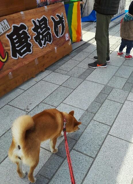 f:id:shibainumugi:20190324092449j:image