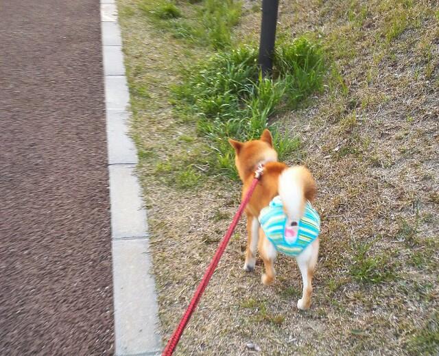 f:id:shibainumugi:20190327223111j:image