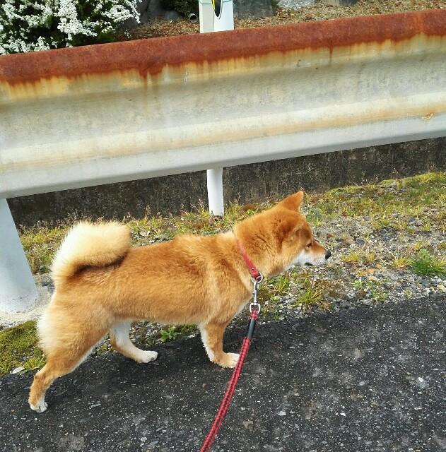 f:id:shibainumugi:20190331101034j:image