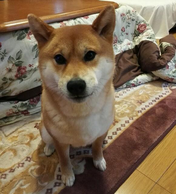 f:id:shibainumugi:20190401163216j:image
