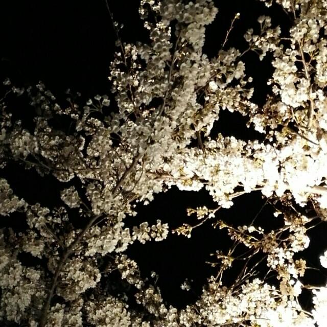 f:id:shibainumugi:20190405105742j:image