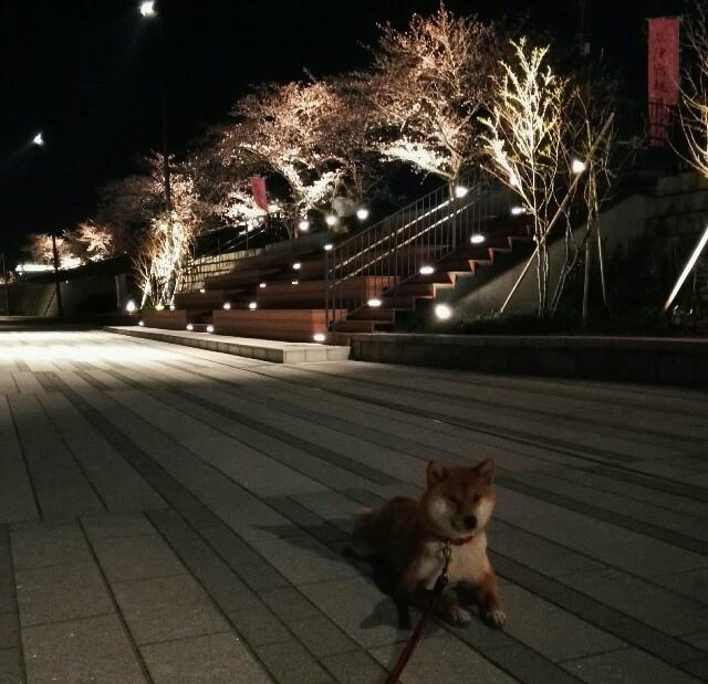 f:id:shibainumugi:20190405122017j:image