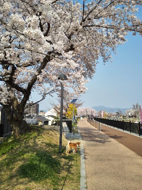 f:id:shibainumugi:20190407125131j:image